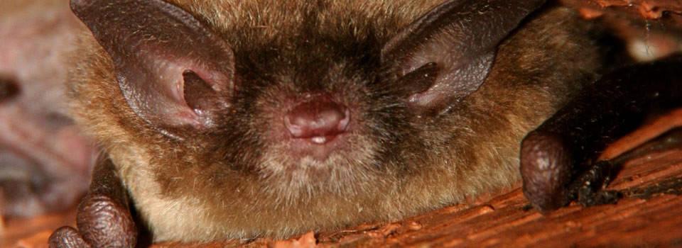 Texas Bat Control
