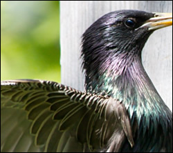 bird control Texas