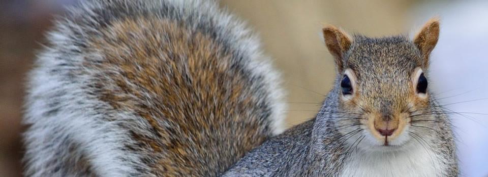 Wildlife Control, Wildlife Removal TX
